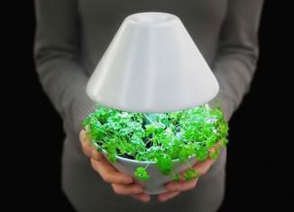 Световые потребности растений